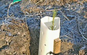 东华盛顿植树造林可行研究H21-002微型气象站