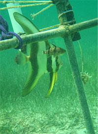 卡塔尔沿海水域环境监测U22-001