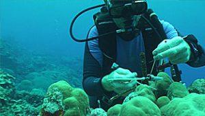 密克罗尼西亚珊瑚礁UA-002-64