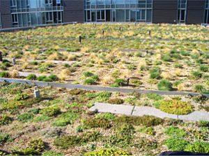绿色屋顶性能研究-U30-NRC Onset气象站